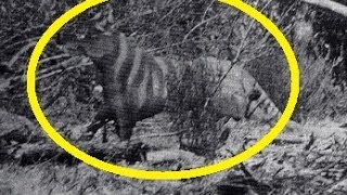 getlinkyoutube.com-3 Mysterious Creatures Caught On Photo