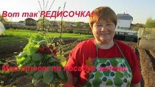getlinkyoutube.com-Вот так РЕДИСКА!!! Хитрый способ дал свой урожай.