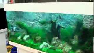 getlinkyoutube.com-zookauf Aquarien-Einrichtungs-Meisterschaft: Der Film zum Wettbewerb