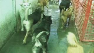 getlinkyoutube.com-Street Dogs: Who Cares?