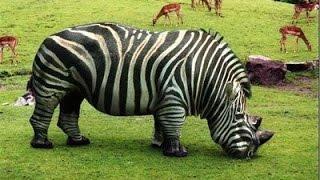 getlinkyoutube.com-Top 10 Animales Híbridos Más Increíbles del Mundo