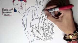 Cardiology - Heart Physiology I (Cardiac Myocyte and Membrane Potential)