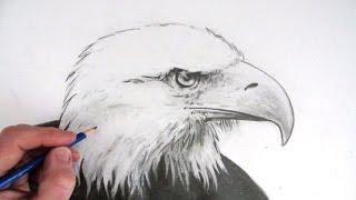 getlinkyoutube.com-How to Draw an Eagle's Head Narrated Step by Step