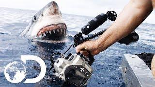 35ft Great White Shark Lurking in 'The Kill Zone' | Super Predator width=