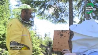 getlinkyoutube.com-Grama prinde un roi de albine in stil propriu