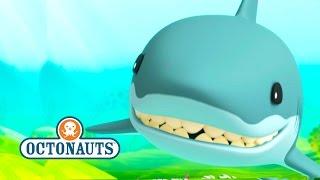getlinkyoutube.com-Octonauts: Sharks And More sharks