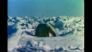 Fred Bear Polar Bear Hunt!