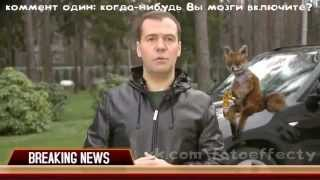 Медведев и  упоротый лис!