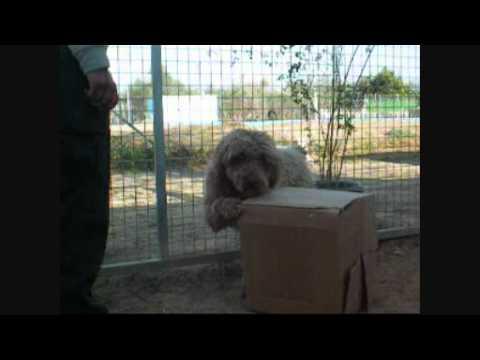 El juego de la caja - juego mental y físico para perros