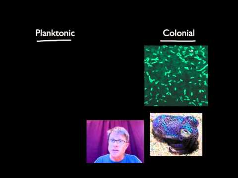 036 Evolutionary Significance Of Cell Communication Bozemanscience