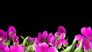 getlinkyoutube.com-Футаж цветы