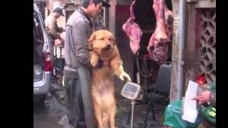 getlinkyoutube.com-Stop Yulin eating Dog Festival 2015