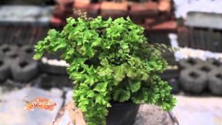 getlinkyoutube.com-สุขในสวน special พาช้อปปิ้งร้านบรรจงลงสรวง