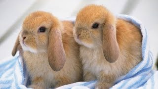 getlinkyoutube.com-Ultimate A Funny And Cute Bunny Rabbit Videos Compilation 2016 | Laugh TV