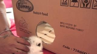 HOMEMADE MINI BUNNY PLAY BOX