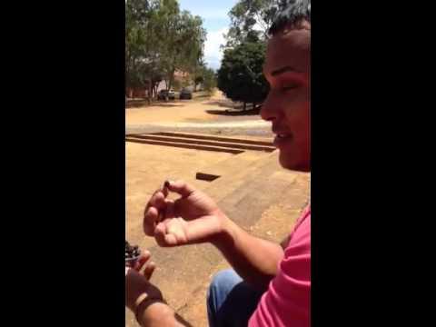 Comiendo hormigas culonas