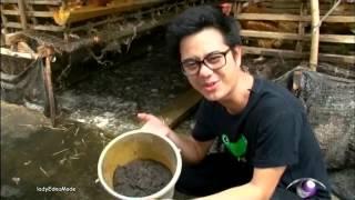 getlinkyoutube.com-การเลี้ยงปลาทอง