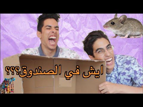ايش الي في الصندوق؟؟ | فأر في بيتنا