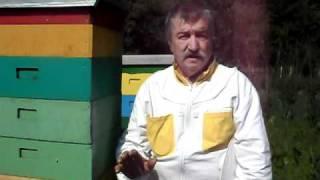 getlinkyoutube.com-Toza pčelar iz Krivelja govori o svom načinu pčelarenja 1.deo