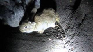 getlinkyoutube.com-Ямное содержание кролей