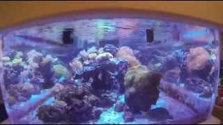 getlinkyoutube.com-Kessil LED Aquarium Lights LA Fishguys Episode 136 part 2