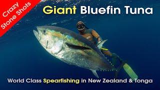 getlinkyoutube.com-Spearfishing New Zealand Bluefin Tuna & Tonga with MJK
