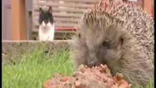 Overweight Hedgehog - Parry Gripp