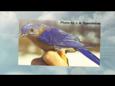 Birding For Beginners - Getting Started