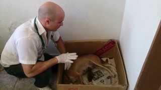 getlinkyoutube.com-Cadela dando cria, saiba salvar seu filhote da morte,orientações médica RODVET-Geriatria Canina