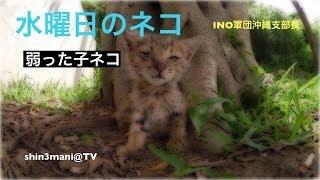 getlinkyoutube.com-【閲覧注意】少し弱っている子猫【水曜日のネコ】行方が気になります