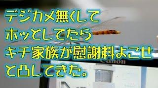 getlinkyoutube.com-【スカッとする話】デジカメを無くしてホッとしてたらキチ家族が慰謝料よこせと凸してきた。