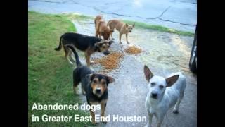 Barrio Dogs Inc. - Houston Texas - Dog Rescue 4
