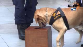 getlinkyoutube.com-สุนัขตำรวจเอกไมโล และพลพรรคK-9 ออกอีเว้นท์โชว์กลางสยาม ท่ามกลางไทย-ฝรั่งมุง
