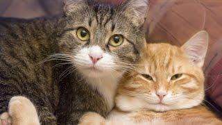 getlinkyoutube.com-You Should Get A Second Cat