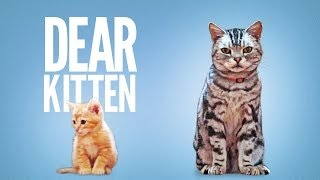 getlinkyoutube.com-Dear Kitten