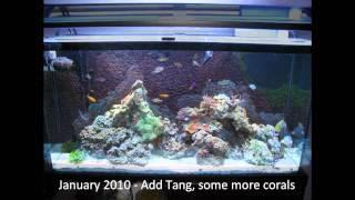 getlinkyoutube.com-Dan's Reef Tank 2008-2010 time lapse
