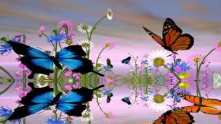 Fantastic Butterfly Screensaver http://www.screensavergift.com