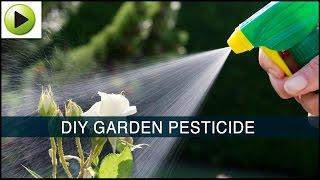 getlinkyoutube.com-Homemade Garden Pesticide