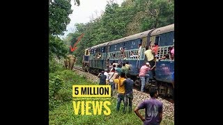 Huge Elephant chasing train and train moving back to avoid collision.