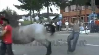 Best Horses Fails Compilation HD