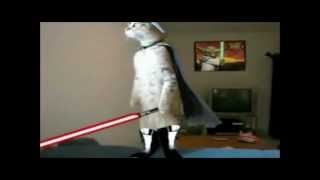 getlinkyoutube.com-Jedi cats fights compy star wars .wmv