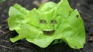 getlinkyoutube.com-Annoying Orange Parody: Lettuce Killer!