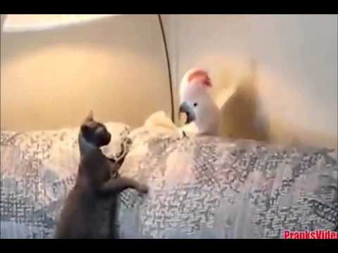 funny videos cats....video lucu bikin ngakak I video lucu