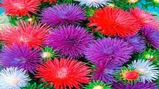 getlinkyoutube.com-▬► Flores hechas de papel. Parte 1.