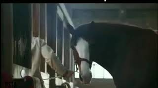 Yaara Teri Yaari Ko Maine Khuda Mana .... Dog friendship horse