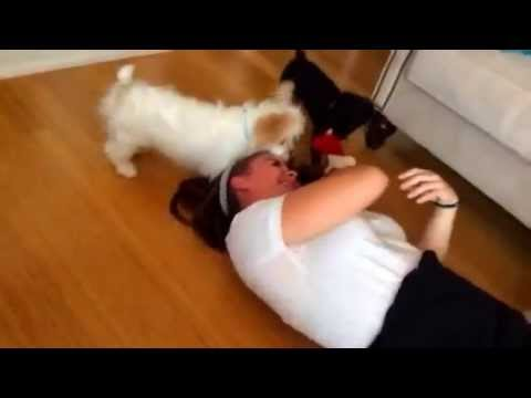 Wild dogs attack innocent girl!