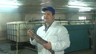 «Неслучайный репортаж». Белгородское рыбоводство (11.01.2016)