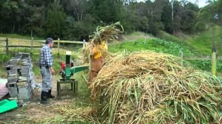 getlinkyoutube.com-Escuela de Campo - Alimentación de ganado lechero, Producción de Ensilaje - Mayo 15 de 2013