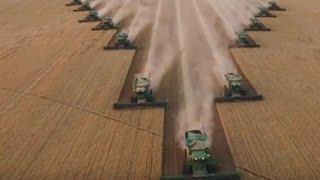 Уборка зерна 12 комбайнами одновременно!