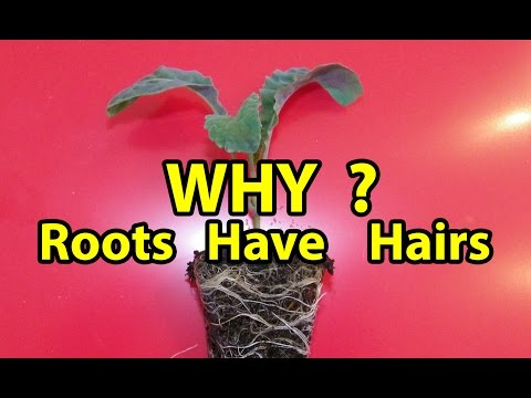 Why Roots have Hairs? Organic gardening 101 Back to Eden Method with wood chips